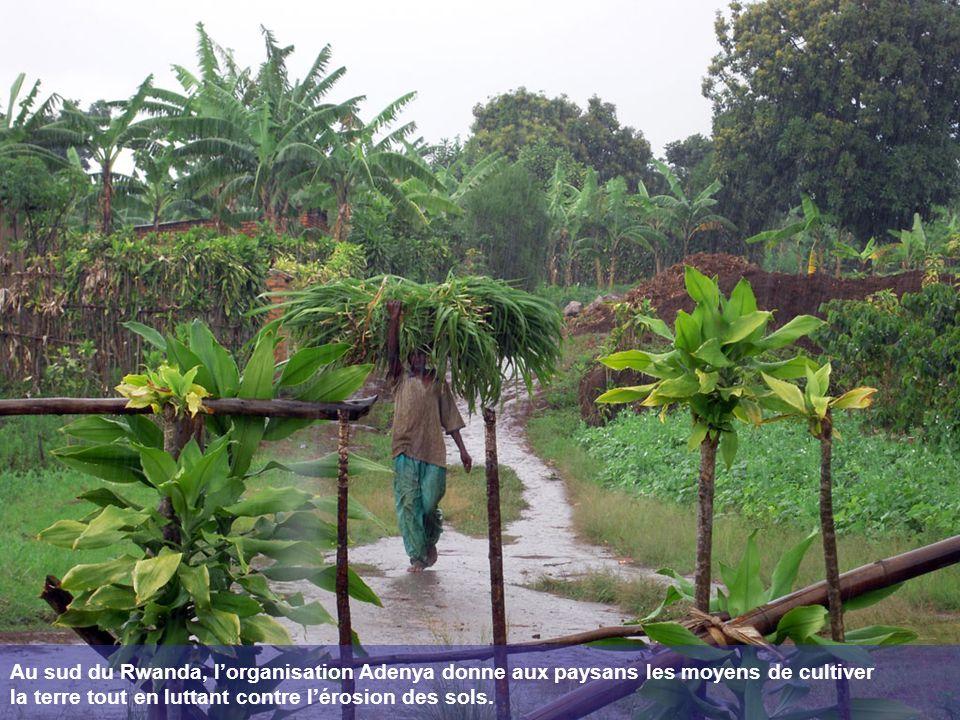 Au sud du Rwanda, lorganisation Adenya donne aux paysans les moyens de cultiver la terre tout en luttant contre lérosion des sols.