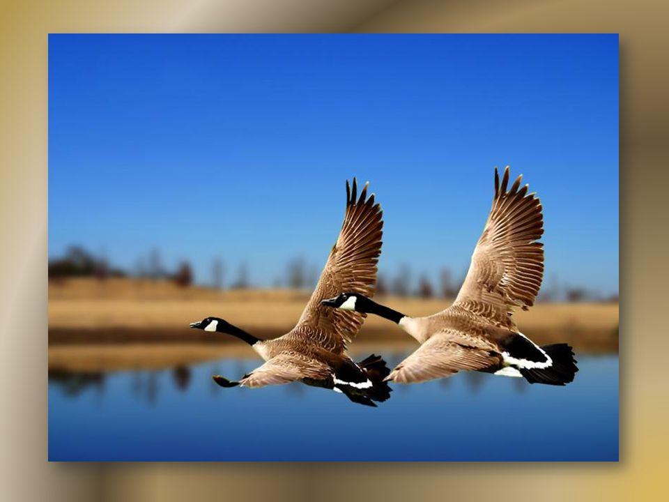 Le mot liberté est probablement le seul qui n'admet, par définition, aucune restriction. - Jean Yanne