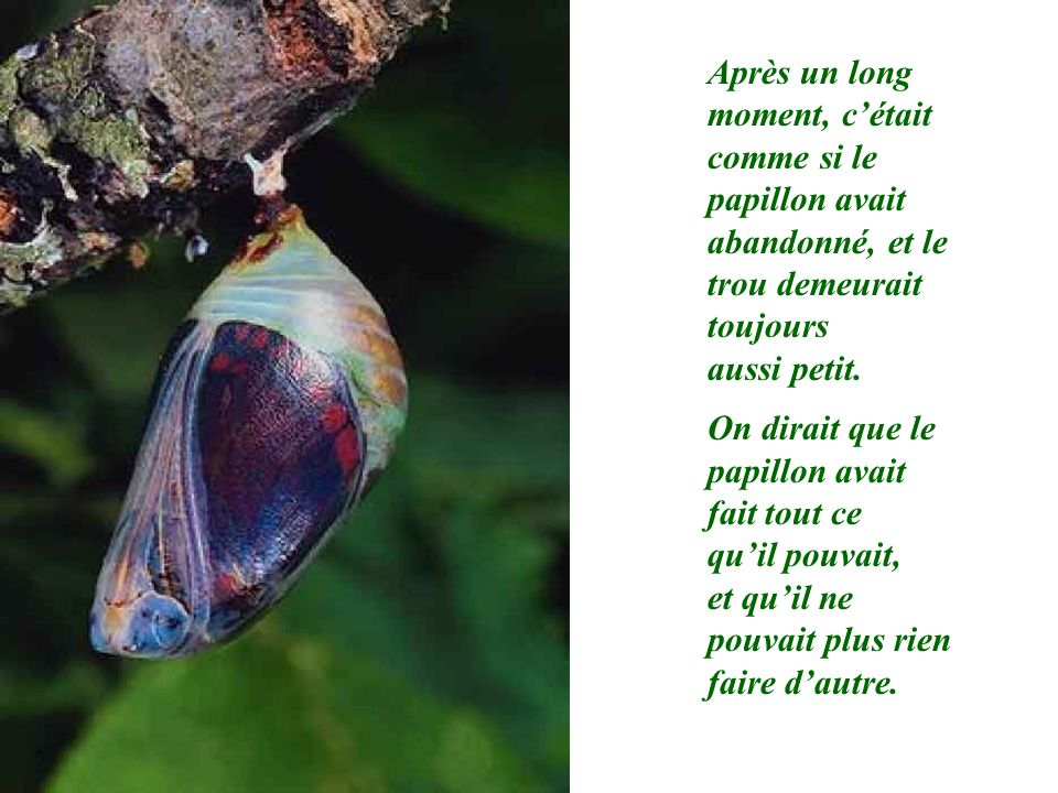 Après un long moment, cétait comme si le papillon avait abandonné, et le trou demeurait toujours aussi petit. On dirait que le papillon avait fait tou