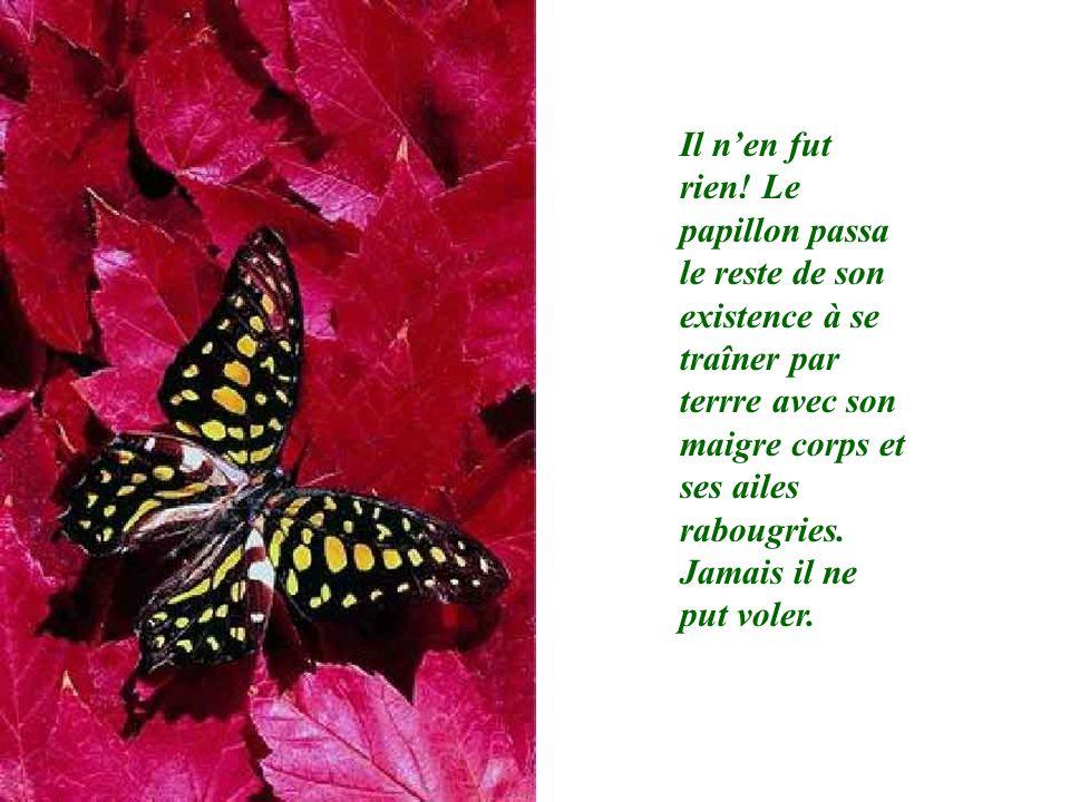 Il nen fut rien! Le papillon passa le reste de son existence à se traîner par terrre avec son maigre corps et ses ailes rabougries. Jamais il ne put v