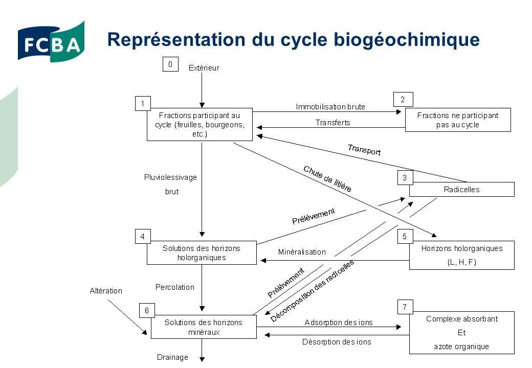 Représentation du cycle biogéochimique