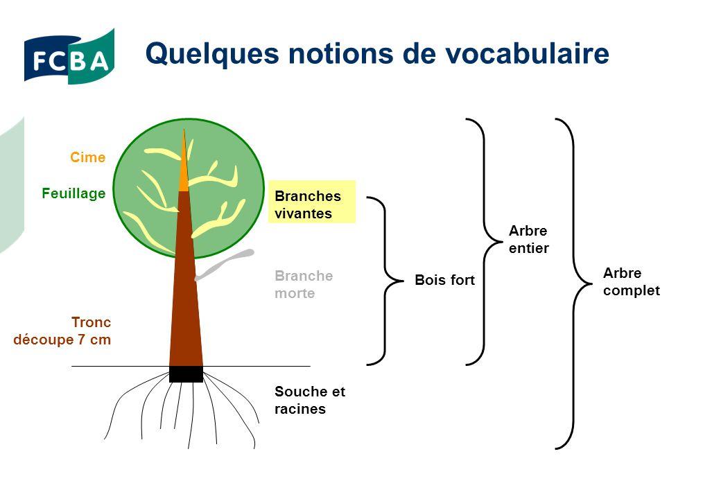 Quelques notions de vocabulaire Tronc découpe 7 cm Cime Branches vivantes Branche morte Feuillage Souche et racines Bois fort Arbre entier Arbre complet
