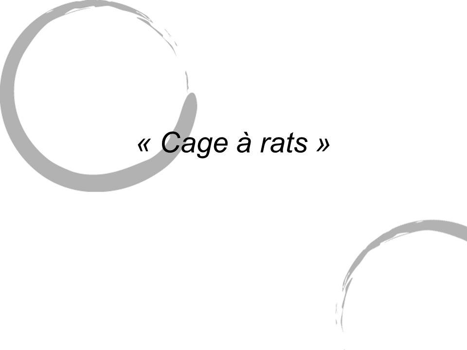« Cage à rats »