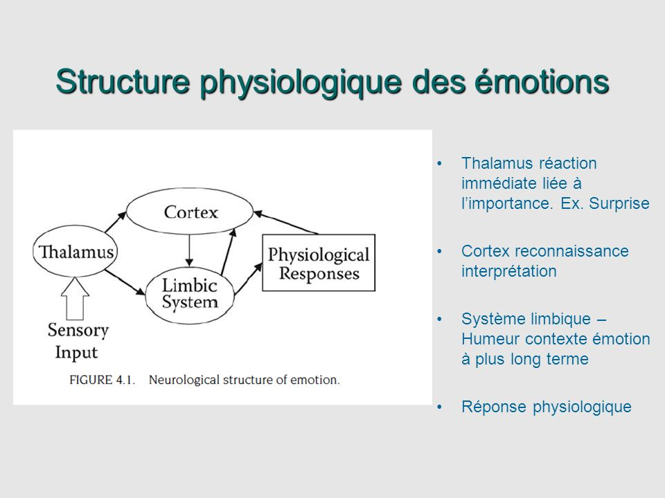 Structure physiologique des émotions Thalamus réaction immédiate liée à limportance. Ex. Surprise Cortex reconnaissance interprétation Système limbiqu