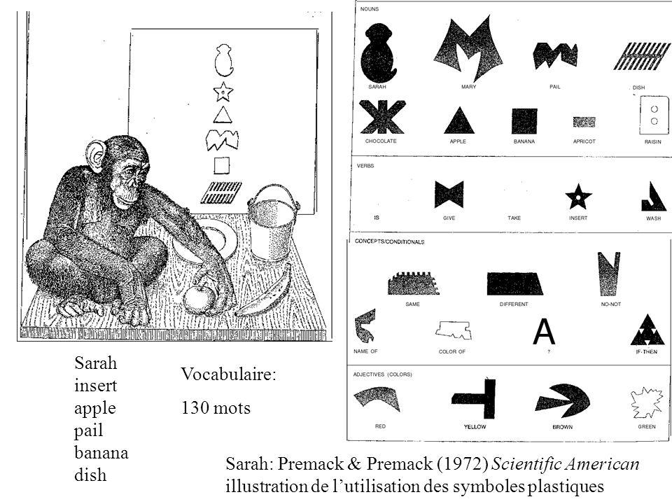 Sarah: Premack & Premack (1972) Scientific American illustration de lutilisation des symboles plastiques Sarah insert apple pail banana dish Vocabulaire: 130 mots