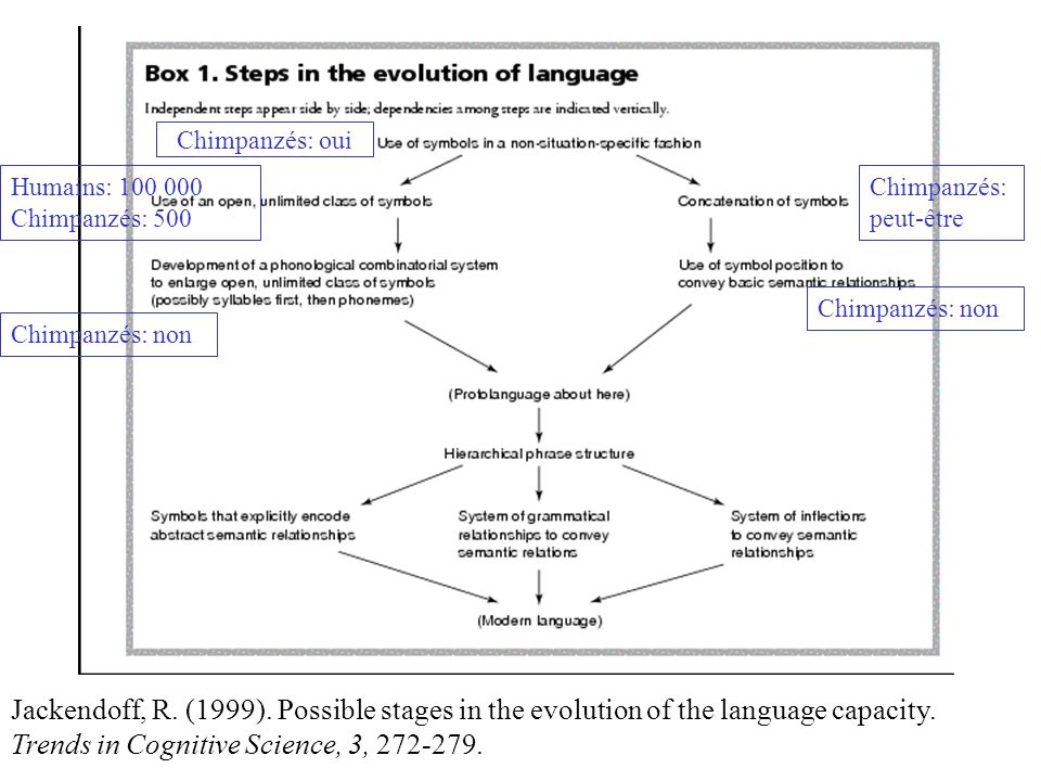 Jackendoff, R.(1999). Possible stages in the evolution of the language capacity.