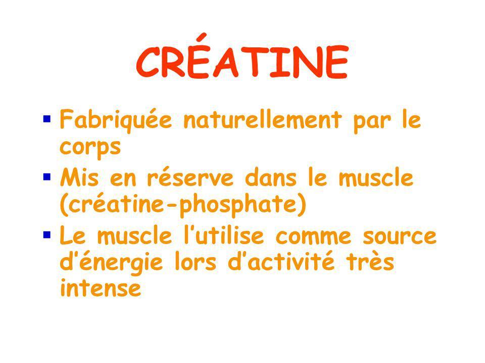 CRÉATINE Fabriquée naturellement par le corps Mis en réserve dans le muscle (créatine-phosphate) Le muscle lutilise comme source dénergie lors dactivité très intense