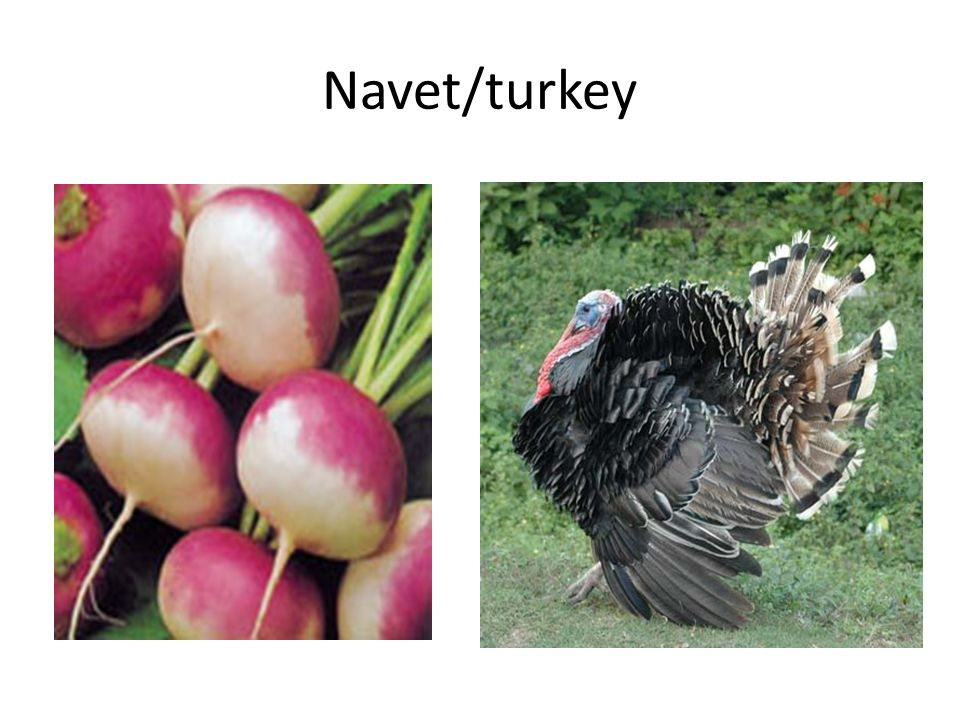 Navet/turkey