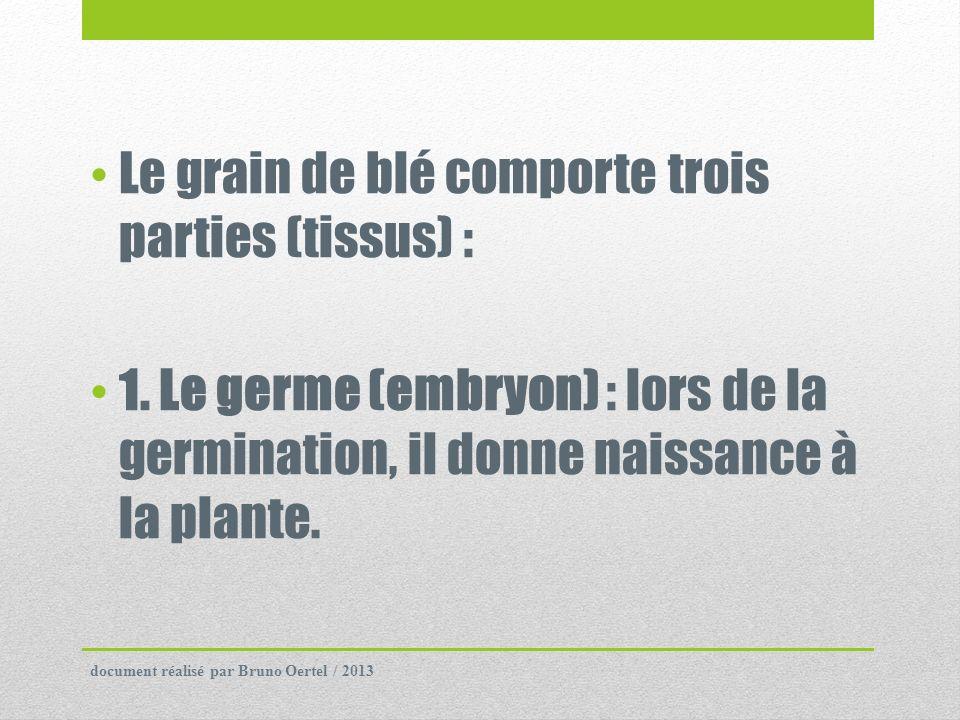Le grain de blé comporte trois parties (tissus) : 1. Le germe (embryon) : lors de la germination, il donne naissance à la plante. document réalisé par