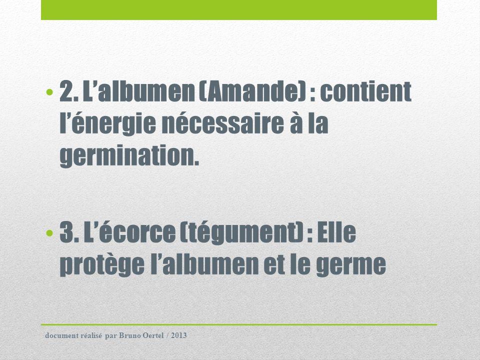 2. Lalbumen (Amande) : contient lénergie nécessaire à la germination. 3. Lécorce (tégument) : Elle protège lalbumen et le germe document réalisé par B