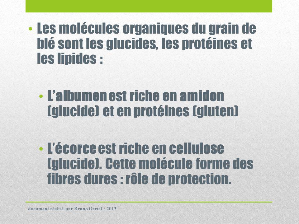 Les molécules organiques du grain de blé sont les glucides, les protéines et les lipides : Lalbumen est riche en amidon (glucide) et en protéines (glu