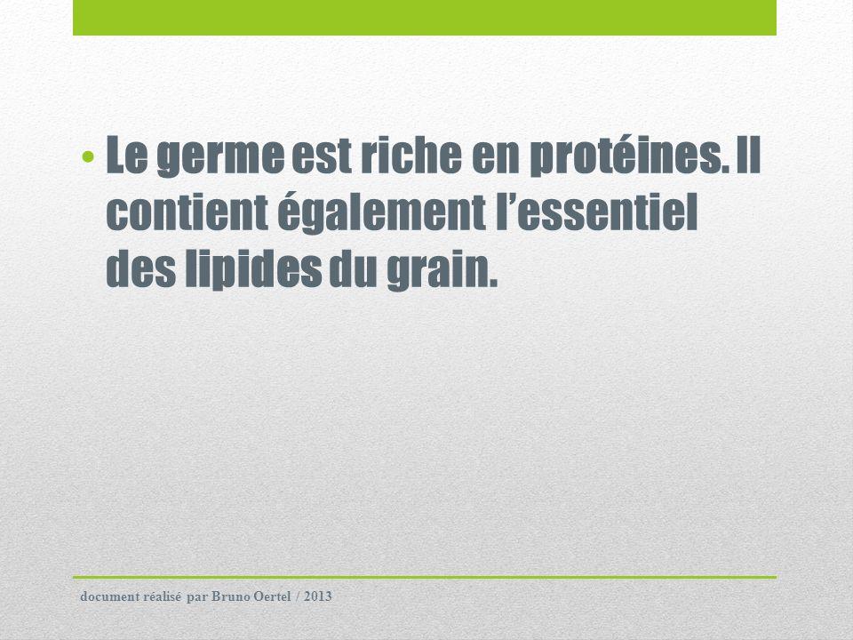 Le germe est riche en protéines. Il contient également lessentiel des lipides du grain. document réalisé par Bruno Oertel / 2013