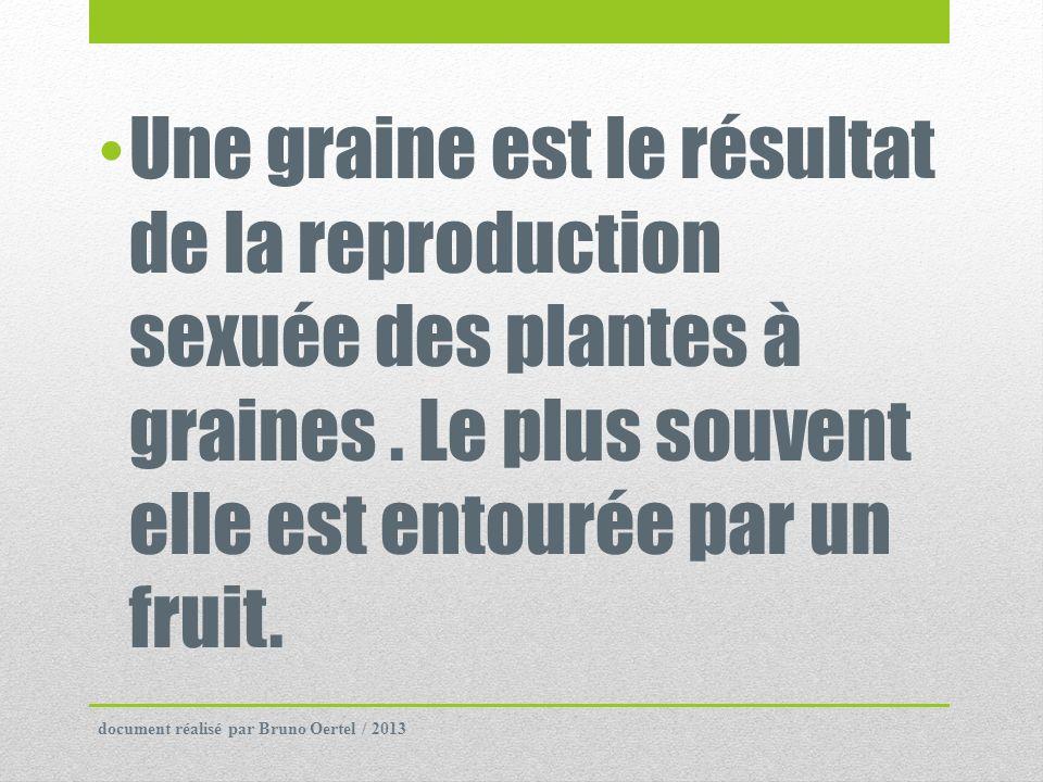 Une graine est le résultat de la reproduction sexuée des plantes à graines. Le plus souvent elle est entourée par un fruit. document réalisé par Bruno