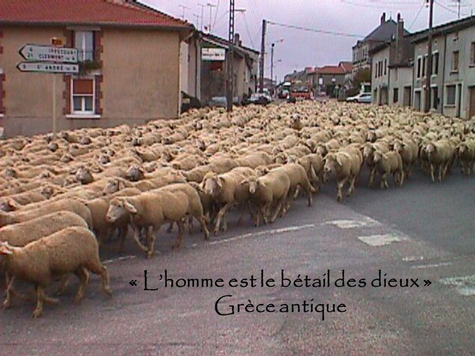 « Lhomme est le bétail des dieux » Grèce antique