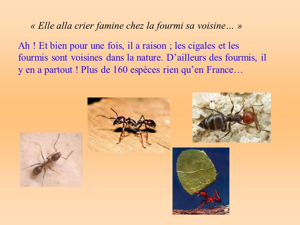 « Elle alla crier famine chez la fourmi sa voisine… » Ah .