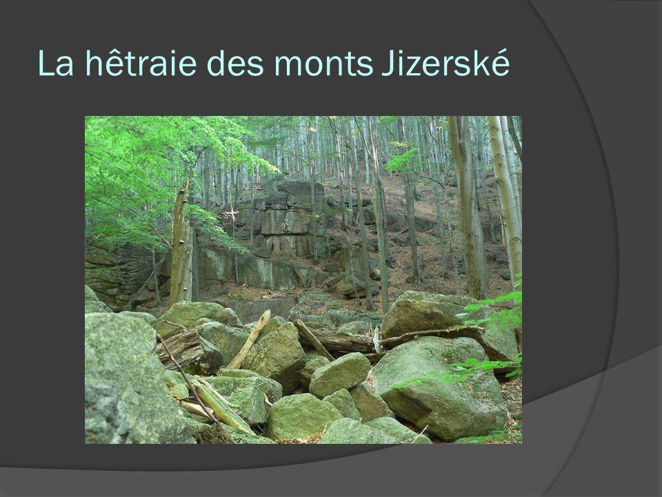 La hêtraie des monts Jizerské