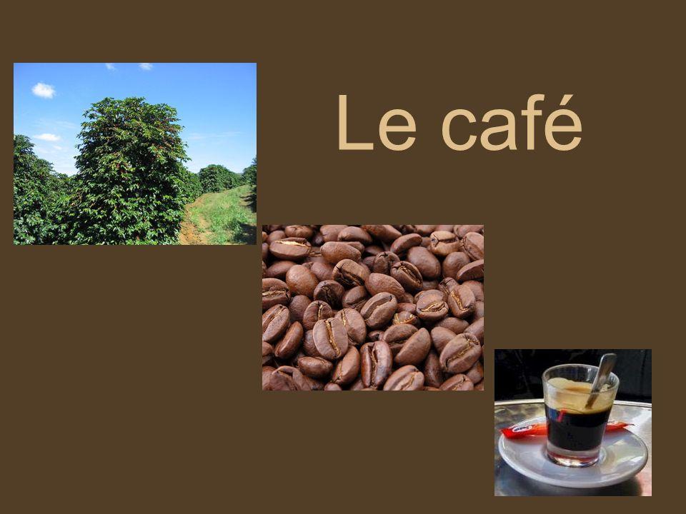 Résumé Production et consommation dans le monde Du caféier à la tasse Le café « de terroir » ou « dorigine » Le café équitable Le café BIO
