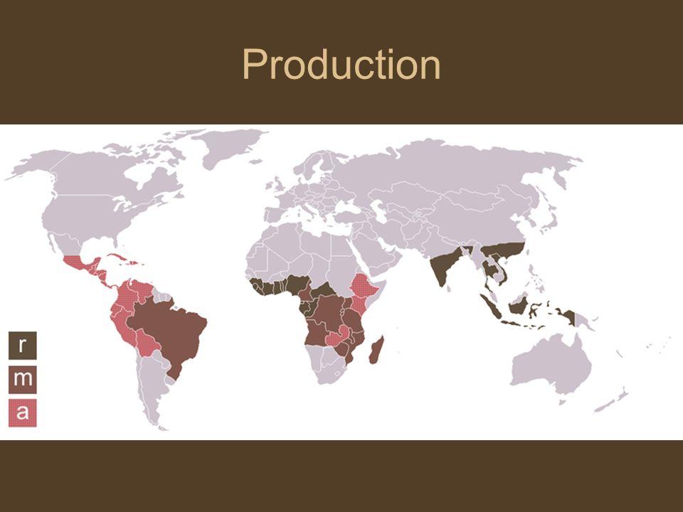 Production – quelques chiffres Production mondiale: 6-7 millions de tonnes (soit 100-120 millions de sacs de 60kg).