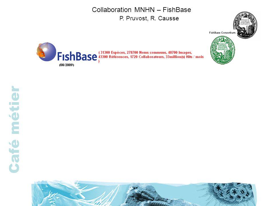 Café métier Collaboration MNHN – FishBase P. Pruvost, R. Causse