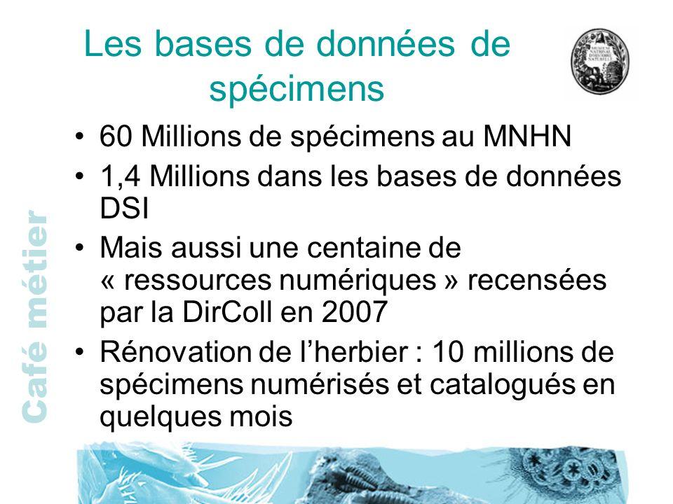 Café métier Les bases de données de spécimens 60 Millions de spécimens au MNHN 1,4 Millions dans les bases de données DSI Mais aussi une centaine de «