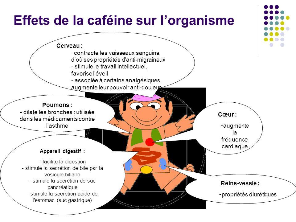 Effets de la caféine sur lorganisme Reins-vessie : - propriétés diurétiques Appareil digestif : - facilite la digestion - stimule la secrétion de bile par la vésicule biliaire - stimule la secrétion de suc pancréatique - stimule la secrétion acide de l estomac (suc gastrique) Cœur : - augmente la fréquence cardiaque Poumons : - dilate les bronches : utilisée dans les médicaments contre l asthme Cerveau : - contracte les vaisseaux sanguins, d où ses propriétés d anti-migraineux - stimule le travail intellectuel, favorise l éveil - associée à certains analgésiques, augmente leur pouvoir anti-douleur