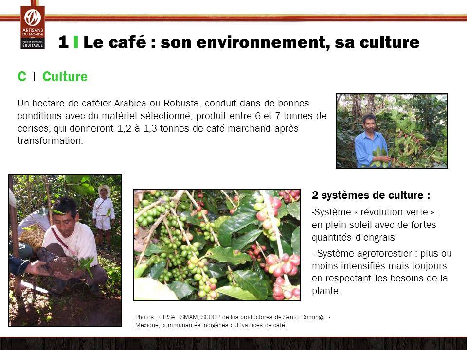 1 I Le café : son environnement, sa culture C | Culture Un hectare de caféier Arabica ou Robusta, conduit dans de bonnes conditions avec du matériel s