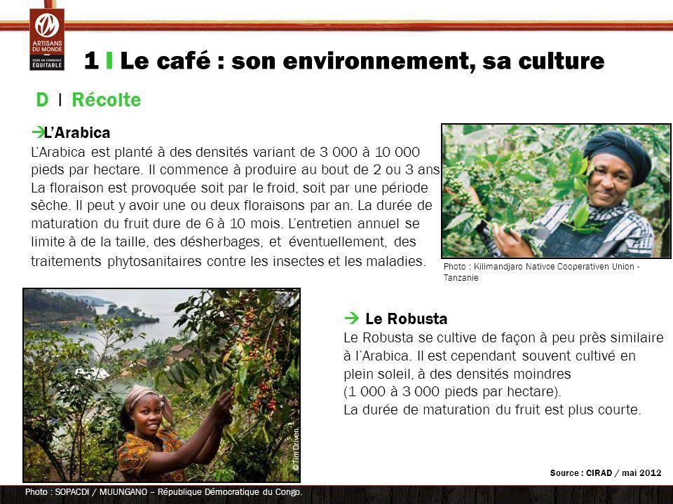 1 I Le café : son environnement, sa culture D | Récolte LArabica LArabica est planté à des densités variant de 3 000 à 10 000 pieds par hectare. Il co