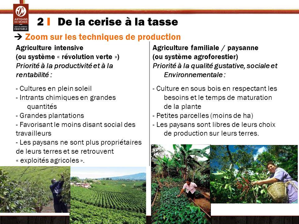 2 I De la cerise à la tasse © Tim Driven Zoom sur les techniques de production Agriculture intensive (ou système « révolution verte ») Priorité à la p