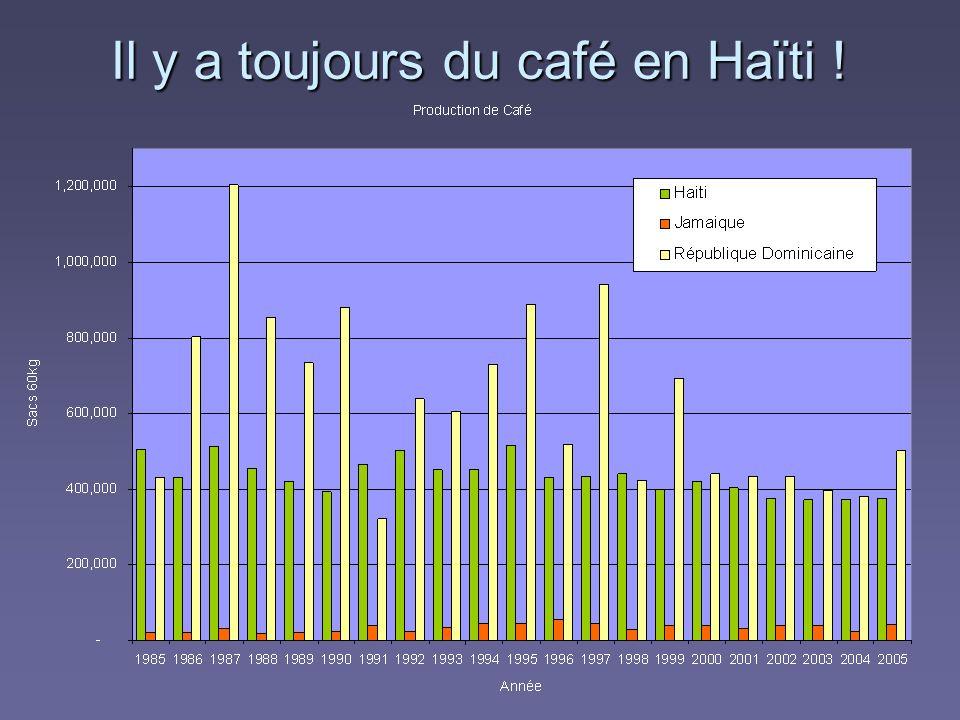 Il y a toujours du café en Haïti !