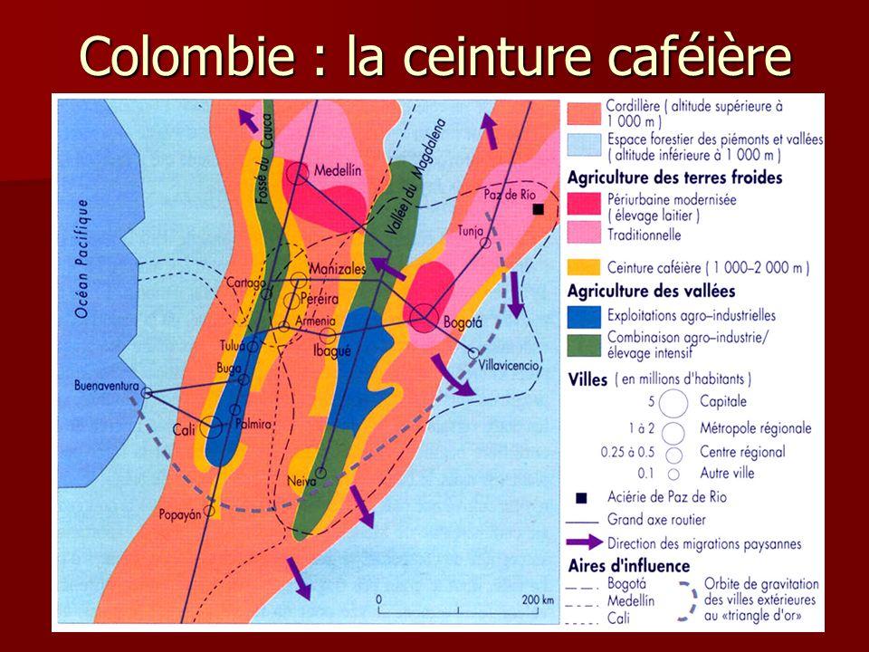 Colombie : la ceinture caféière