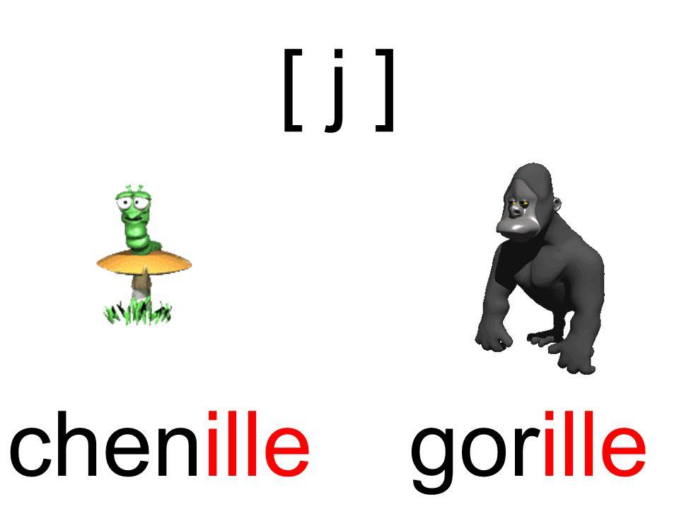 chenille [ j ] gorille