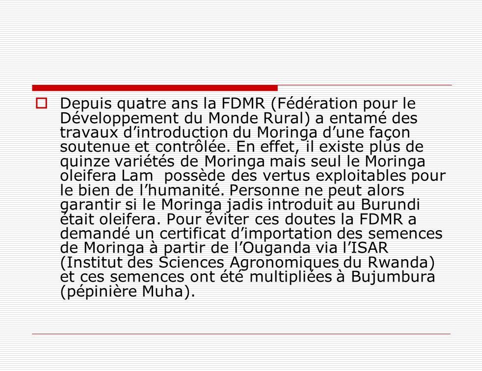 Depuis quatre ans la FDMR (Fédération pour le Développement du Monde Rural) a entamé des travaux dintroduction du Moringa dune façon soutenue et contr