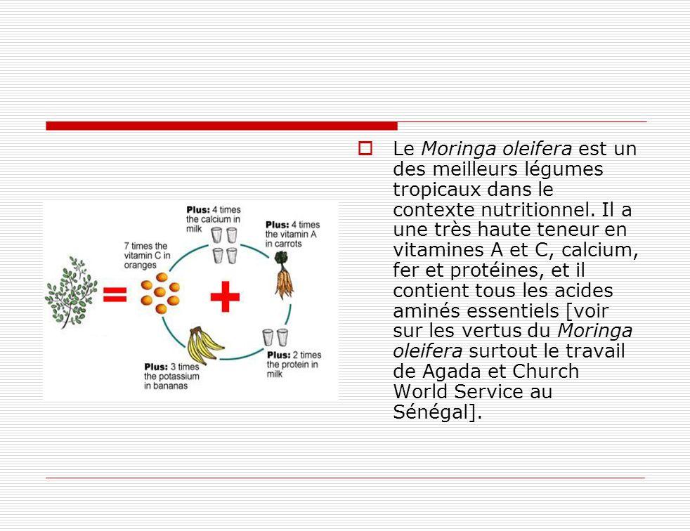 Le Moringa oleifera est un des meilleurs légumes tropicaux dans le contexte nutritionnel. Il a une très haute teneur en vitamines A et C, calcium, fer