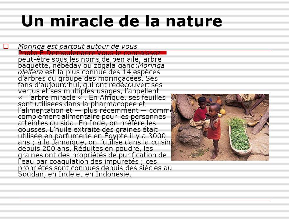 Un miracle de la nature Moringa est partout autour de vous Photo E.Demeulenaere Vous le connaissez peut-être sous les noms de ben ailé, arbre baguette