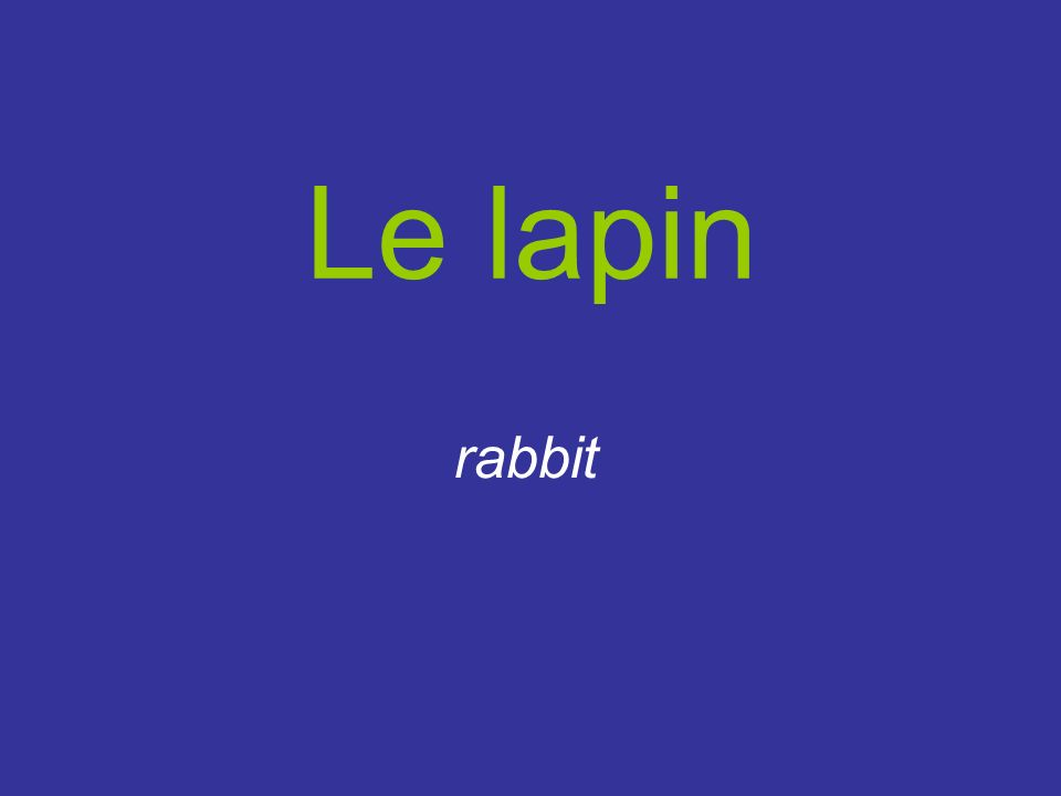Le lapin rabbit