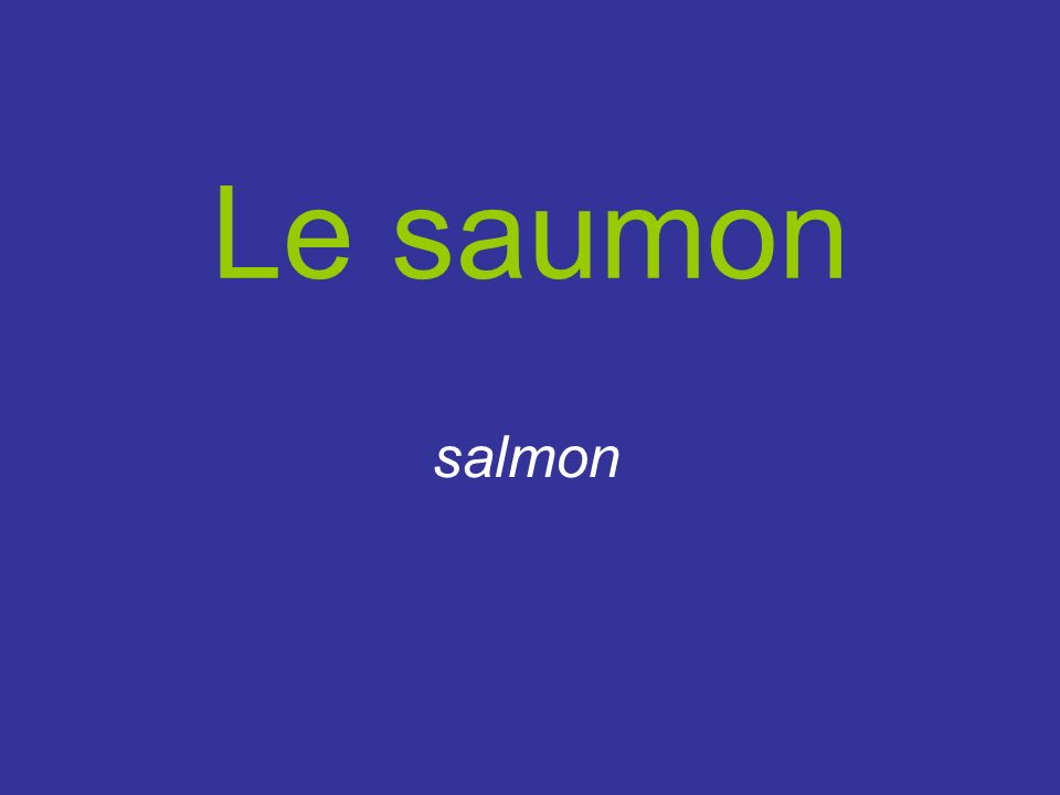 Le saumon salmon