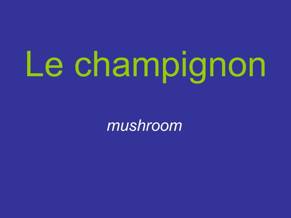 Le champignon mushroom