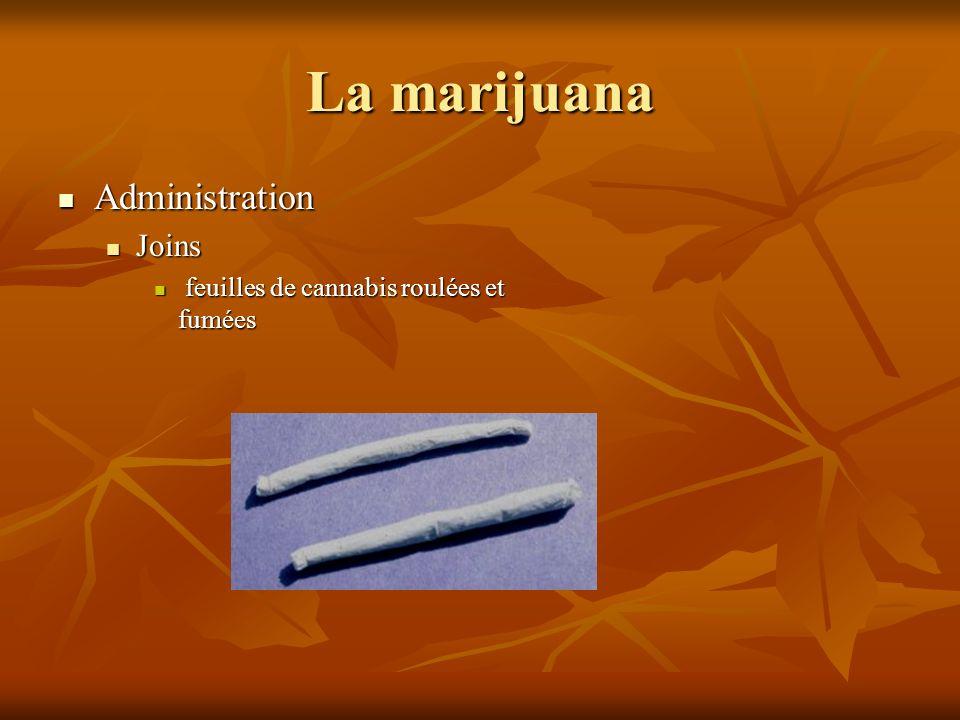 La marijuana Administration Administration Joins Joins feuilles de cannabis roulées et fumées feuilles de cannabis roulées et fumées