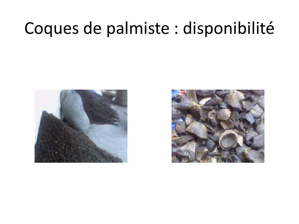 Coques de palmiste : disponibilité