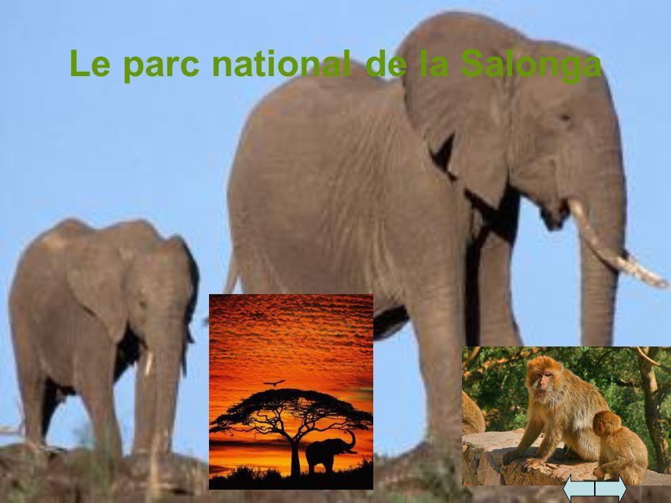 Le parc national de la Salonga