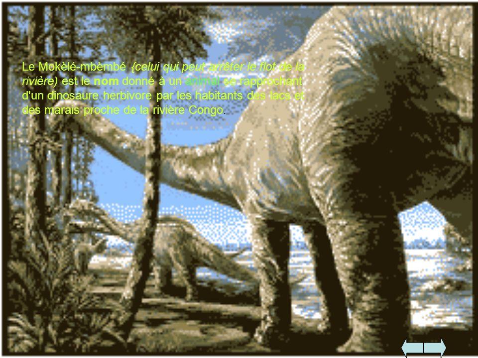 Le Mokèlé-mbèmbé {celui qui peut arrêter le flot de la rivière) est le nom donné à un animal se rapprochant d'un dinosaure herbivore par les habitants