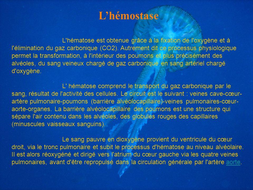 Lhémostase L'hématose est obtenue grâce à la fixation de l'oxygène et à l'élimination du gaz carbonique (CO2). Autrement dit ce processus physiologiqu