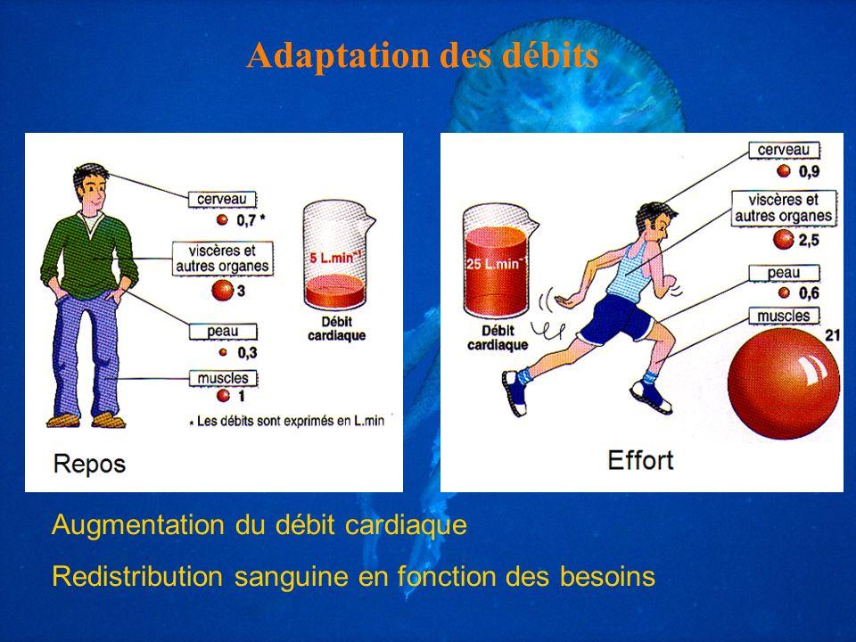 Adaptation des débits Augmentation du débit cardiaque Redistribution sanguine en fonction des besoins