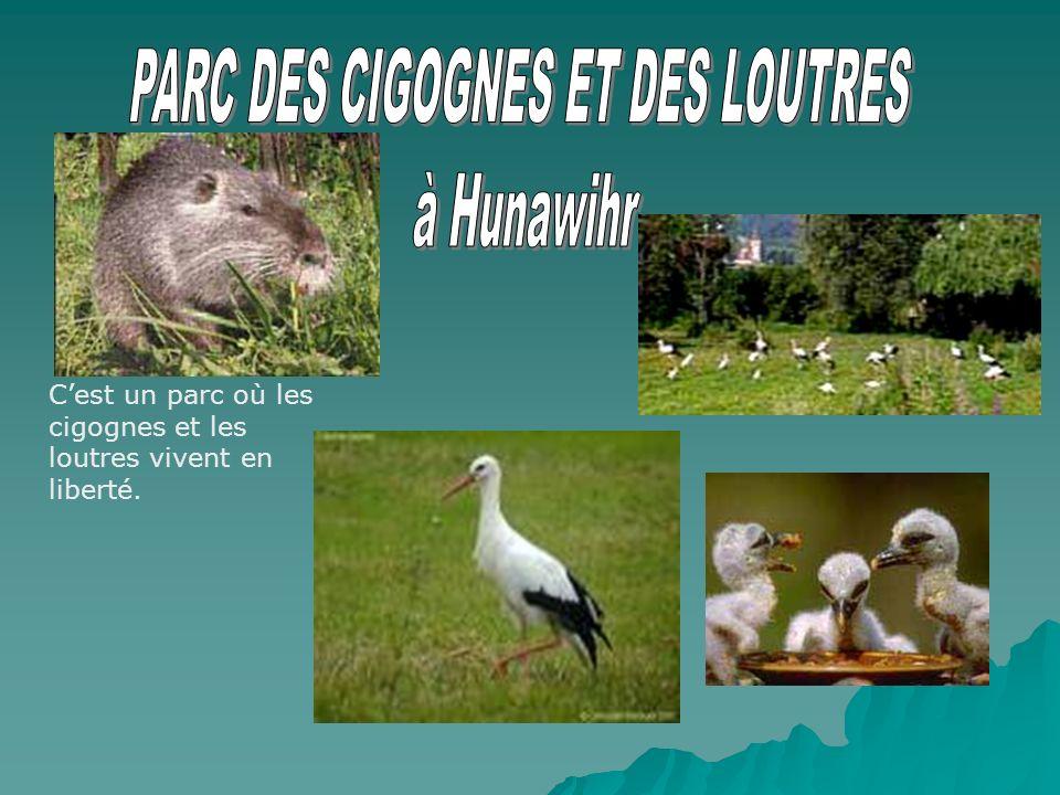 Cest un parc où les cigognes et les loutres vivent en liberté.