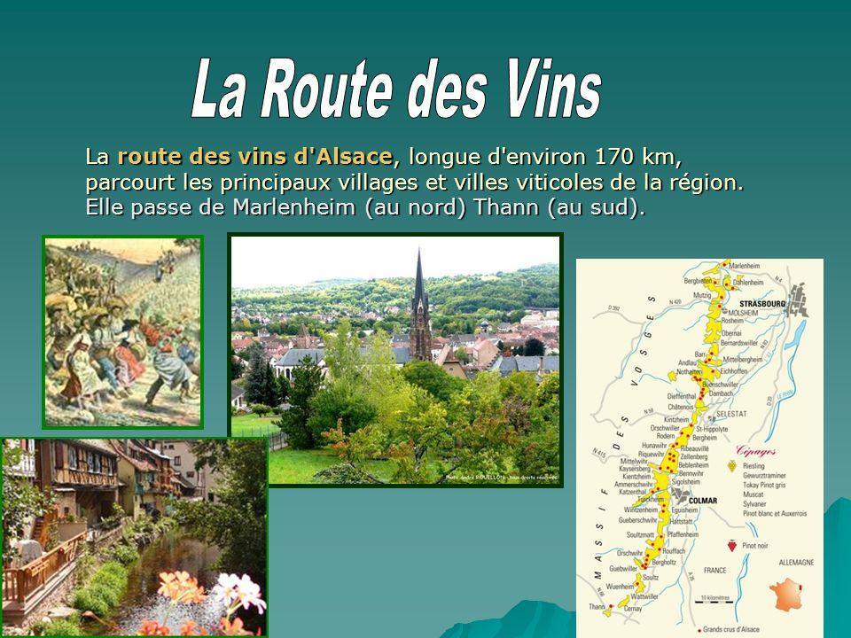 La route des vins d'Alsace, longue d'environ 170 km, parcourt les principaux villages et villes viticoles de la région. Elle passe de Marlenheim (au n