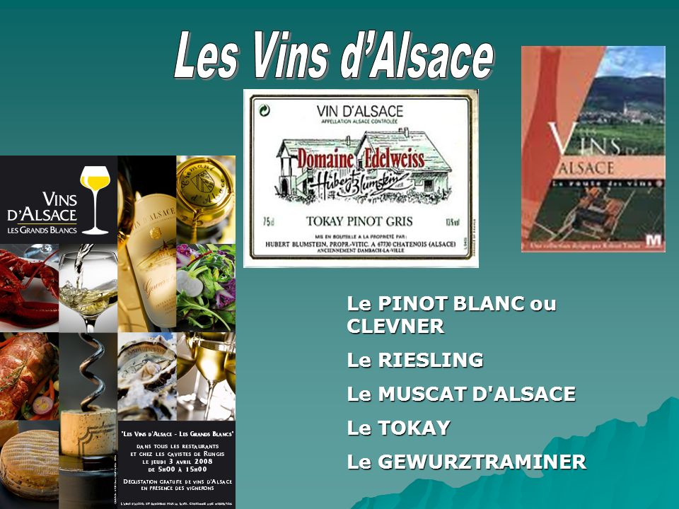 Le PINOT BLANC ou CLEVNER Le RIESLING Le MUSCAT D'ALSACE Le TOKAY Le GEWURZTRAMINER