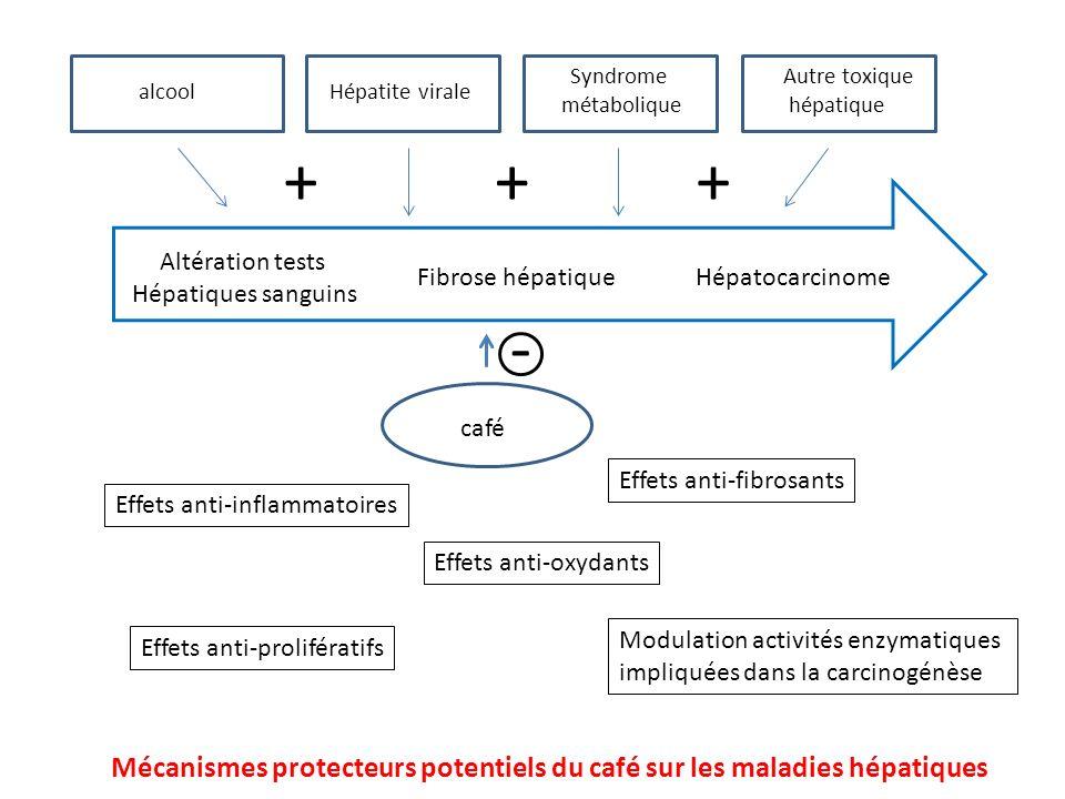 Effets anti-oxydants Effets anti-fibrosants alcoolHépatite virale Syndrome métabolique Autre toxique hépatique café - +++ Altération tests Hépatiques sanguins Fibrose hépatiqueHépatocarcinome Modulation activités enzymatiques impliquées dans la carcinogénèse Effets anti-prolifératifs Effets anti-inflammatoires Mécanismes protecteurs potentiels du café sur les maladies hépatiques