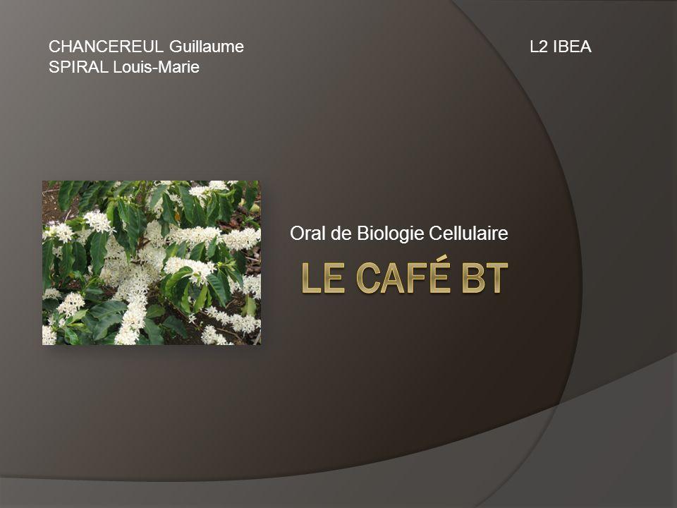 Oral de Biologie Cellulaire CHANCEREUL Guillaume SPIRAL Louis-Marie L2 IBEA