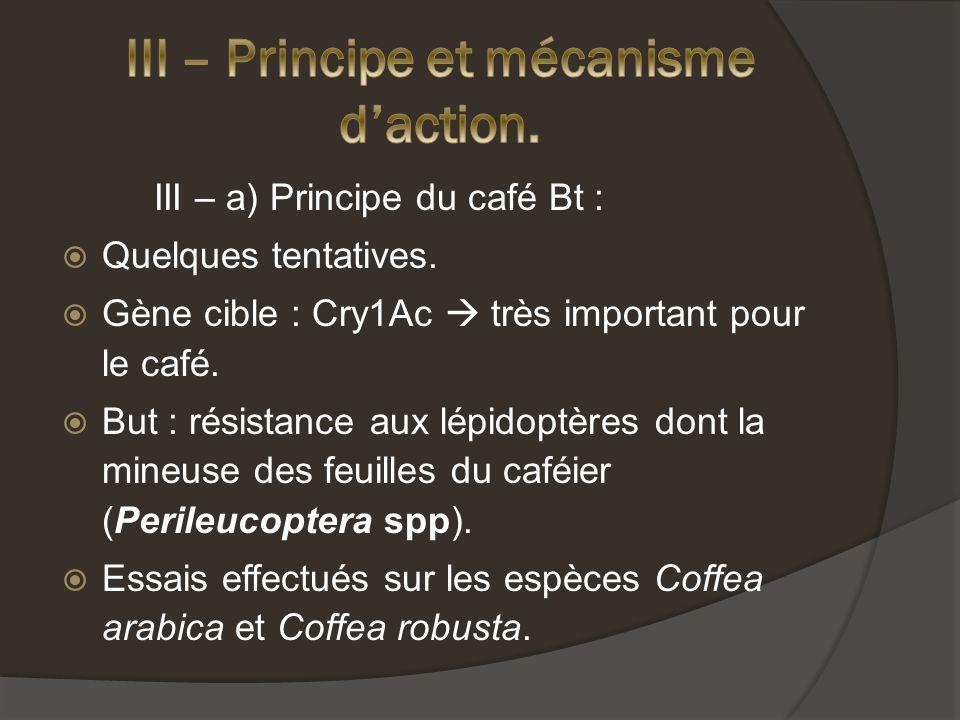III – a) Principe du café Bt : Quelques tentatives.