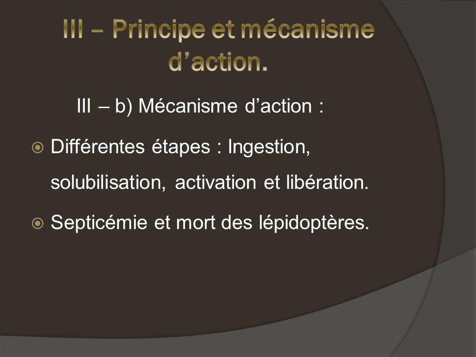 III – b) Mécanisme daction : Différentes étapes : Ingestion, solubilisation, activation et libération.